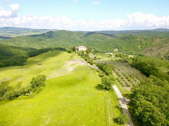 Radicondoli, İtalya: The olive grove and the big pasture of the horses