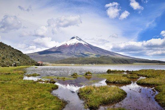 Ecosportour: Cotopaxi  5897m seen from the Laguna de Limpiopungo