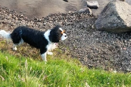 Bed and Breakfast in Faroe Islands Tildugota 7: Our lovely dog Flora
