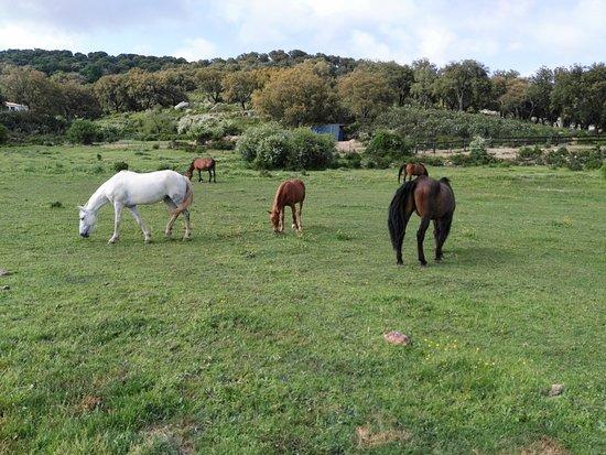 Sierra de Grazalema Natural Park, Spain: En el llano los amigos équidos.