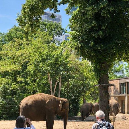 Zoo Berlin Φωτογραφία