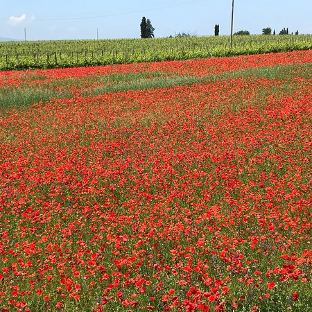 Tuscany Tours by Golden Travel: .