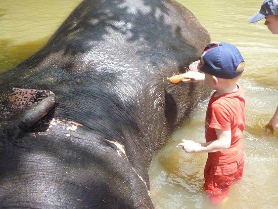 Kegalle, Sri Lanka: Schrobben met een kokosnoot