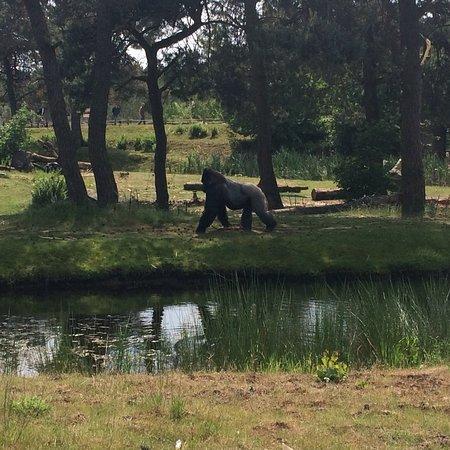 Beekse Bergen Safari Park: photo1.jpg