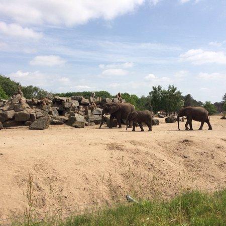 Beekse Bergen Safari Park: photo4.jpg