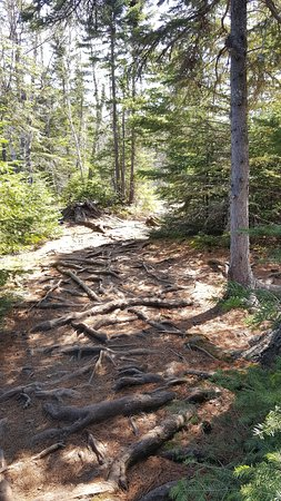 Cascade River State Park: exposed roots