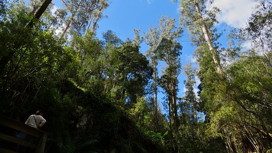 Lilydale, Australia: View of the treetops