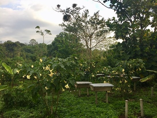 Landscape - Picture of Kasiisi Guesthouse - Tripadvisor