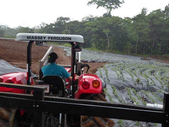 Sarapiqui, Costa Rica: Tractor and Section of Farm With Pineapple Growing