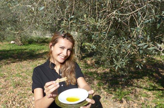 Mallorca Soller Olive Oil Tour ...