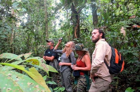 4-Day Amazon Wildlife Adventure in...
