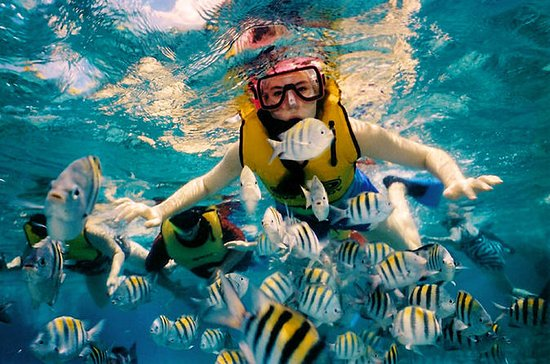 Snorkeling day at Cozumel from Tulum ...