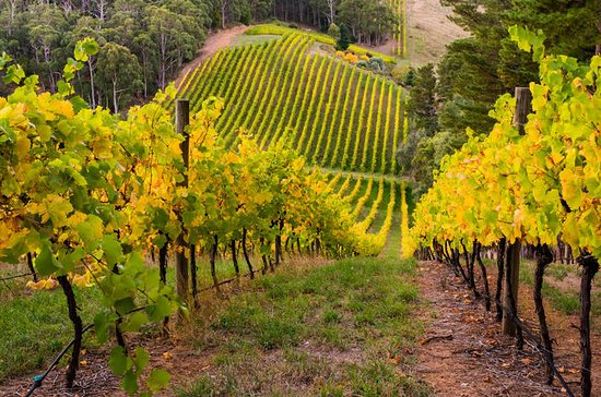 Private Adelaide Hills Weinregion Tour