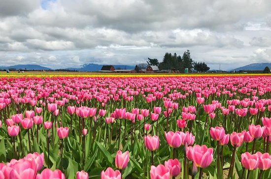 Washington Tulip Festival, Wine...