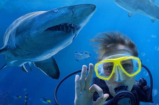 Shark Dive Xtreme at SEA LIFE Sydney...