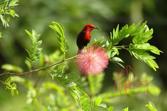 Bird Watching at Samoan Highland ...