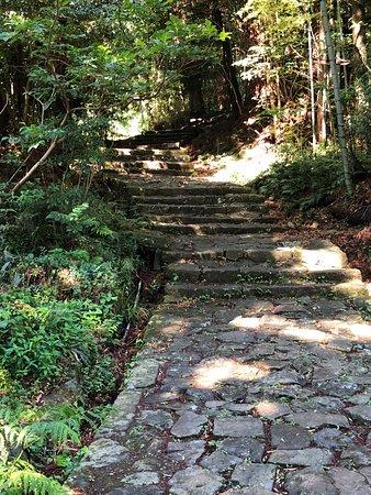 Daimonzaka: 夫婦杉近辺