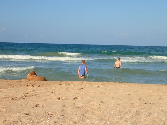 Palm Beach Nilaveli Hotel : We were unsure at first, but a very safe beach. With our dog escort.