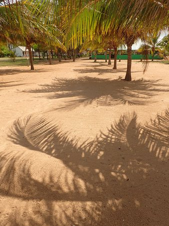 Palm Beach Nilaveli Hotel : If the beach is covered in rubbish - the grounds definitely are not!