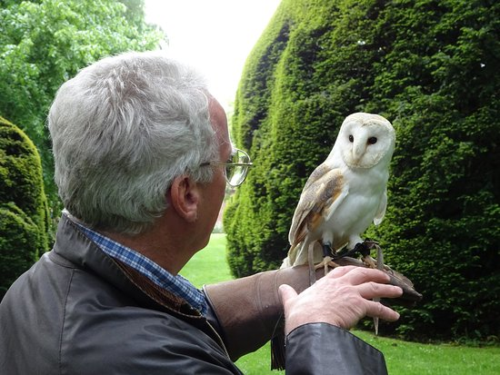 The Hawking Centre: Gracie. the Barn Owl - love at first sight?