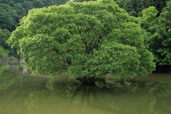 Lake Murou
