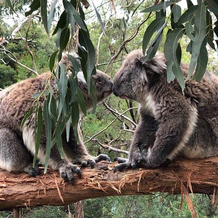 Cowes, أستراليا: photo0.jpg