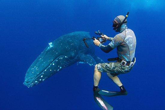 Whale Dive Tonga