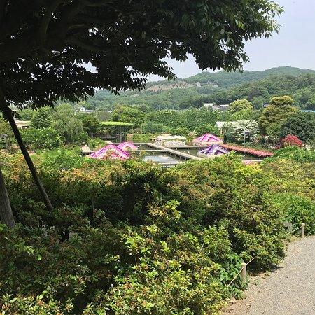 Ashikaga Flower Park: あしかがフラワーパーク