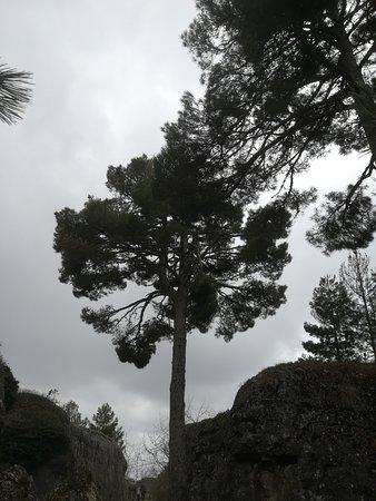Valdecabras, สเปน: Pino mas viejo(200-300 años) de la Ciudad Encantada