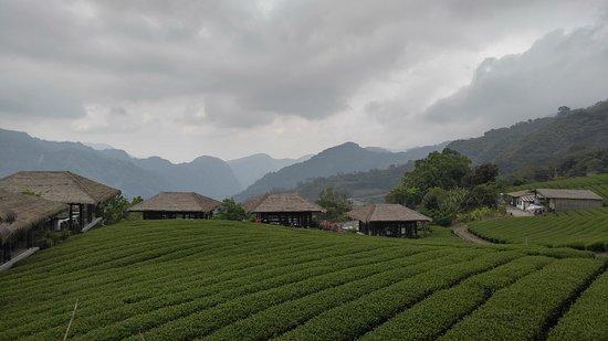 台灣阿里山:鄒族文化部落的茶園風光