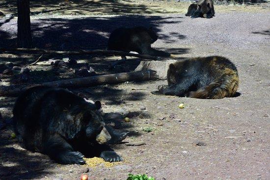 Williams, AZ: Bearizona Wildlife Park