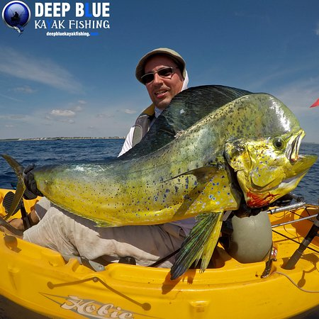 Boynton Beach, FL: Big Bull Mahi off Delray Beach