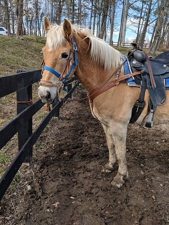 Pine Ridge Dude Ranch: My favorite new addition to the ranch - HASHBROWN! Best horse ever!