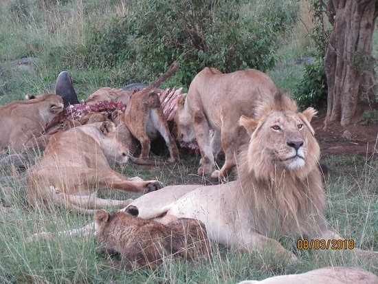 Boundless Africa Journeys: King of the Jungle