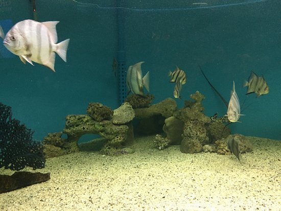 University of Georgia's Marine Education Center and Aquarium照片