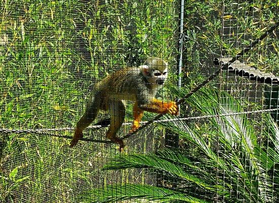 Singes Tres Proche Et Drole Picture Of Parc Zoologique De Frejus Tripadvisor
