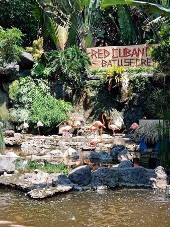 Jawa Timur Park 2: Flamingo