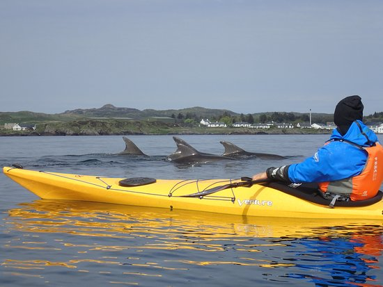Port Ellen, UK: We can't promise dolphins on every trip!