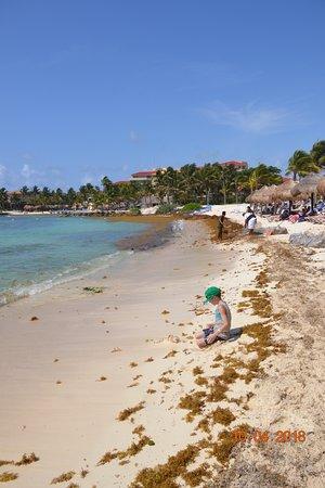 Catalonia Riviera Maya: seaweed
