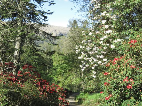 Cairndow, UK: Spring flowers with views to the hills