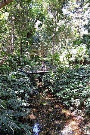 Jardin Botanico Historico La Concepcion照片