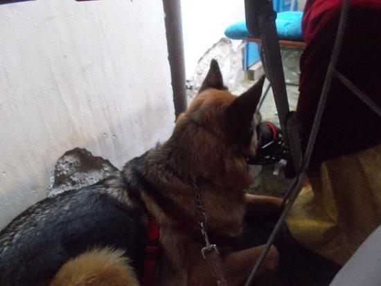 Jicin, Czech Republic: Náš psí doprovod pod stolem. Všimněte si omlácené zdi. A to nebylo jediné místo.
