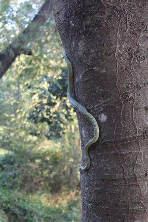 Τα Πεδία Θανάτου (Τσέουνγκ Εκ): snake