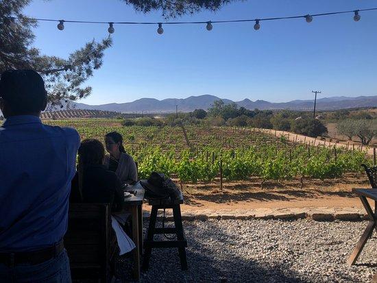 Vineyard Farm To Table Picture Of Boca Roja Baja Wine Adventures - Farm to table san diego