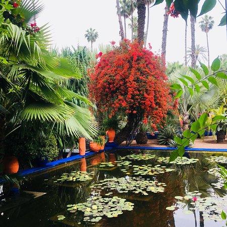 Jardim Majorelle: photo3.jpg