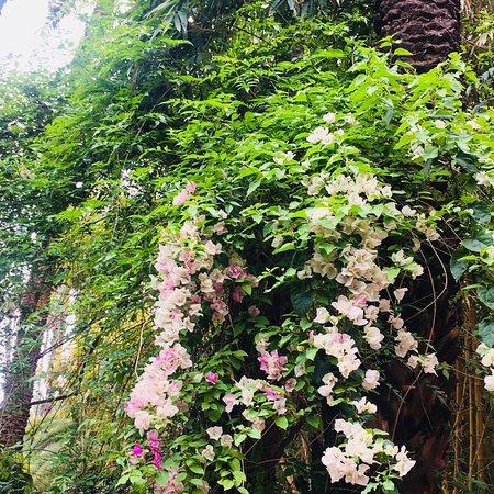 Jardim Majorelle: photo5.jpg