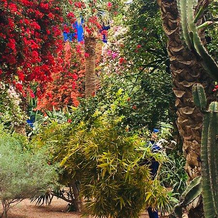 Jardim Majorelle: photo7.jpg