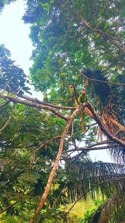 Punta Islita, Costa Rica: Macaws