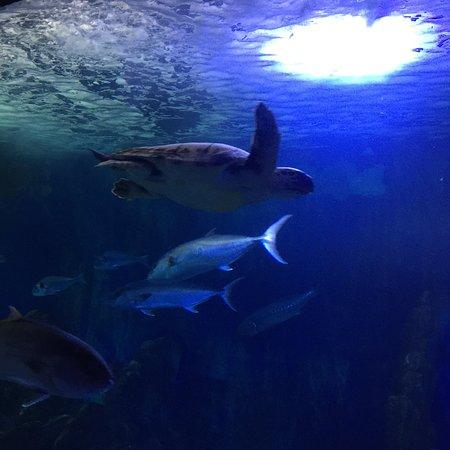 Acquario Cala Gonone Φωτογραφία
