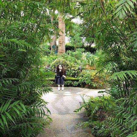 Giardini La Mortella: photo8.jpg